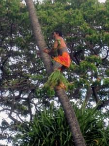 Hawaii 84